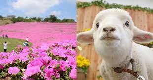 牧羊养殖科技,走向DeFi是主要优势,要想活即要变,委托养羊利用DEFI的概念迎向时代趋势—-