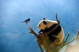 成都大熊猫国家公园(绵竹园区)科普中心亮相——风景如画的高山草甸、花海、雪峰等自然风光尽情分享体验
