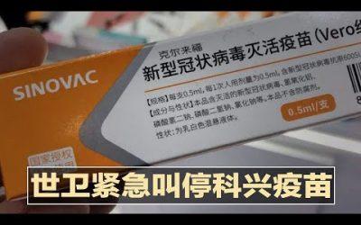 開竅了!澳洲放寬打過科興疫苗可以入境、中國赴澳學生卸下困擾—